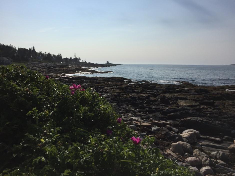 Roses on Ocean Point